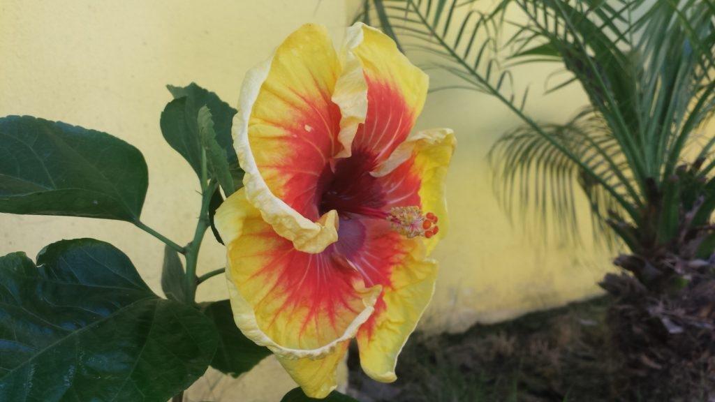 Colors of El Salvador